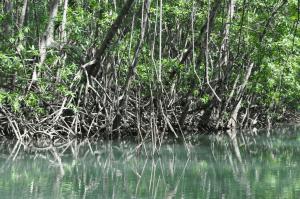 Damas Island Mangrove Estuary by Boat Trip from Jaco