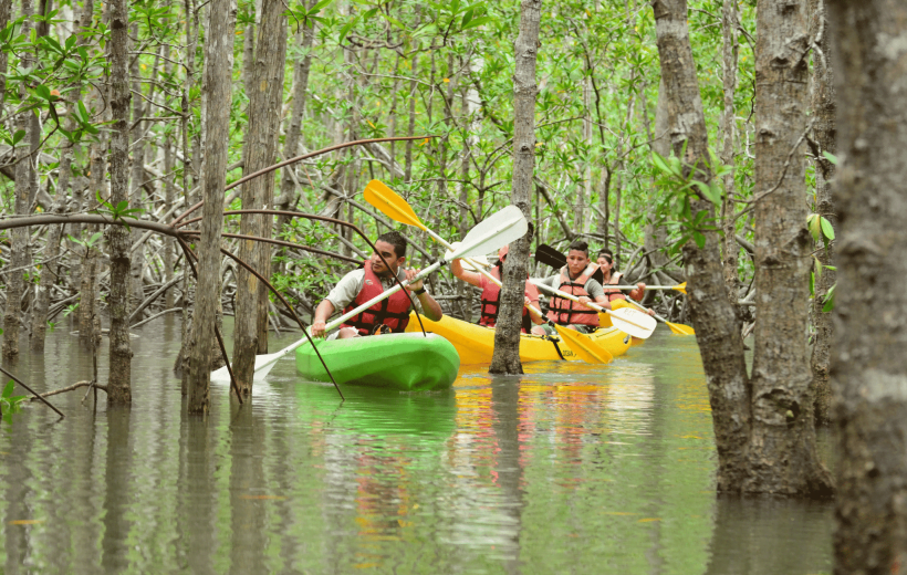 Damas Island Mangrove Estuary – Kayak