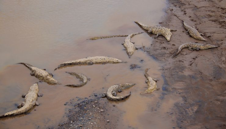 """Carara National Park """"Combo"""""""